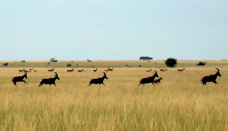 Plaine de Rwindi